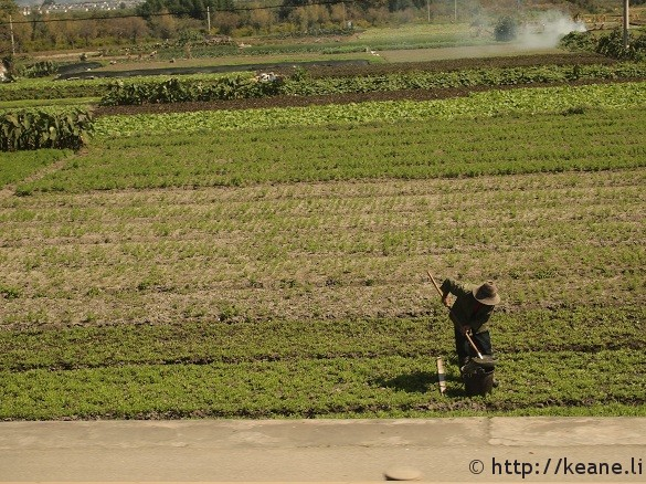 Farmer along the highway in Dali