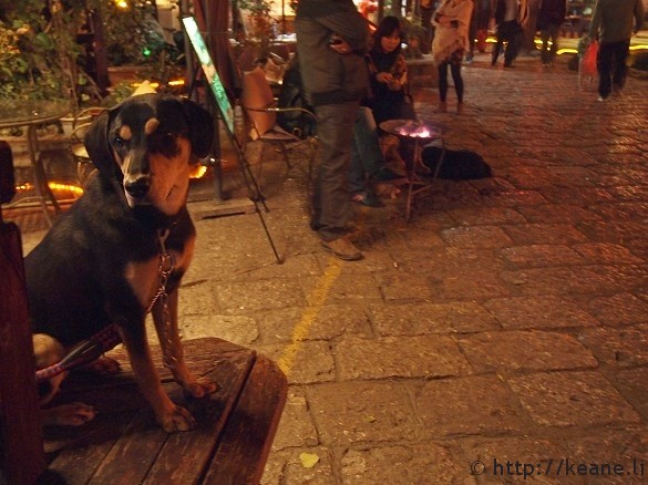 Dog in Lijiang's Shu He Ancient City at night