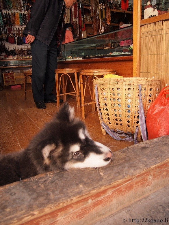 Dog resting on the door frame in a shop in Lijiang Old Town