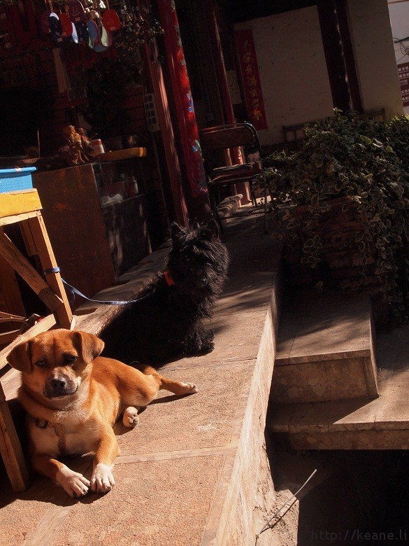 Dogs resting outside of a shop in Lijiang's Shu He Ancient City
