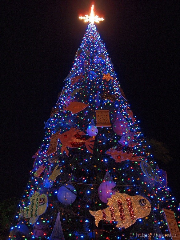 Honolulu City Lights - Christmas 2012 - Christmas Tree