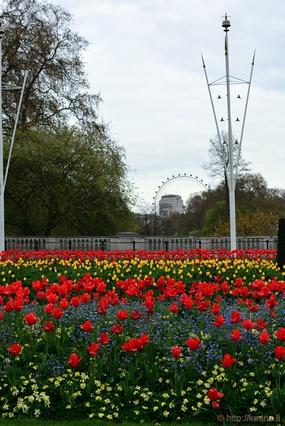 Flowers Outside Buckingham Palace and London Eye