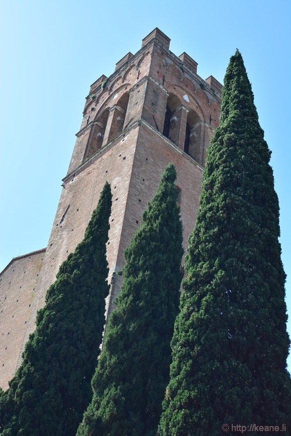 Cyprus Trees in Siena