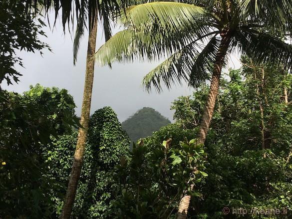 Oahu - Lyon Arboretum