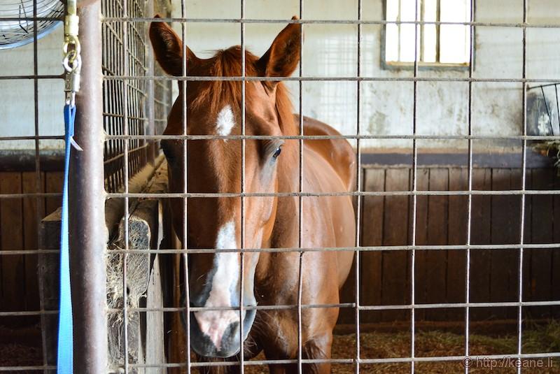 Horse in Austin