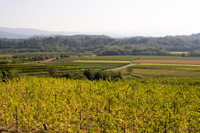 View from Azienda Vitivinicola Specogna